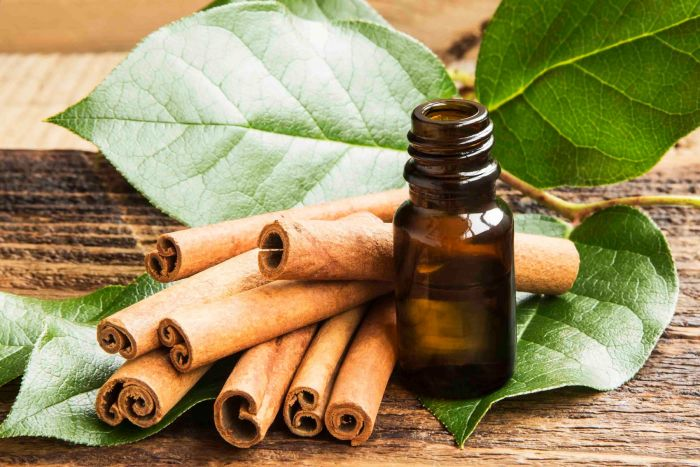 This image has an empty alt attribute; its file name is Cinnamon-Leaf-Essential-Oil-1.jpg