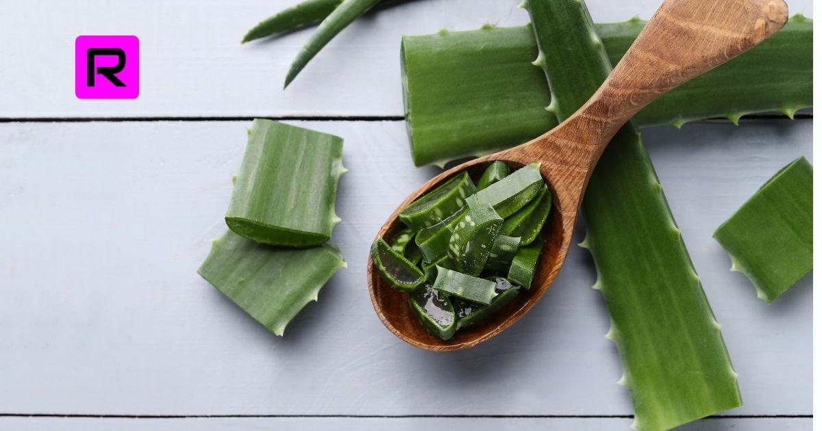 Aloe Vera Skin Gel Benefits for Face and Skin (2021)